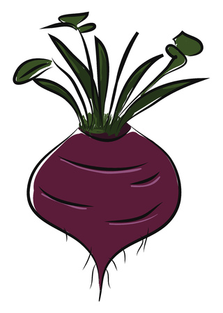A purple beet with green stem and leaves, vector, color drawing or illustration. Illustration