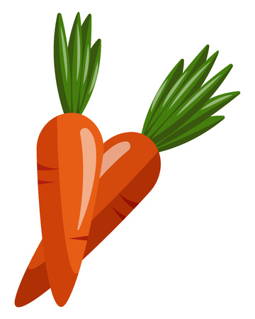 Two Orange carrots with green leaves on top for each of them, vector, color drawing or illustration. Ilustração