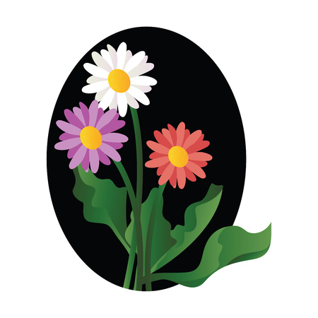 Vector illustration of violet white and pink daisy flowers with green leafs on white background.
