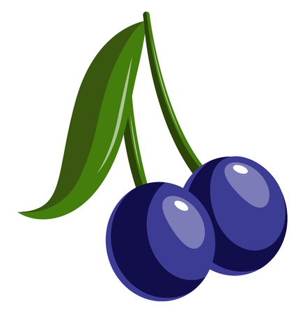 Two Blue berries with long stem and a leaf, vector, color drawing or illustration.