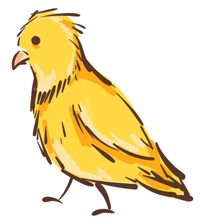 Vector illustration of a yellow canary bird on white background. Ilustração