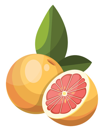 Cartoon of yellow grapefruit cut in half vector illustration on white background.