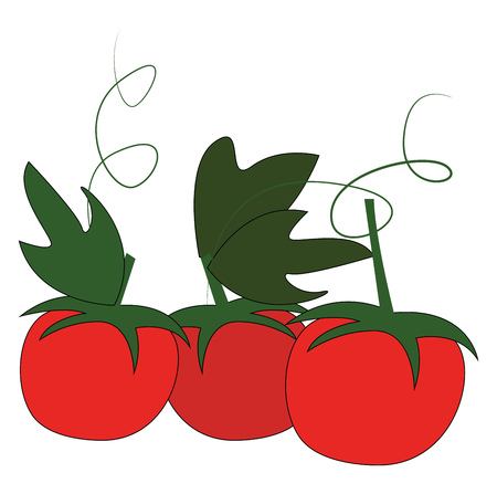 Three red cherry tomatoes with green leafs and petiol vector illustration on white background.