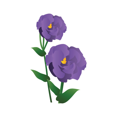 Vector illustration of purple lisianthus flowers with green leafs  on white background.