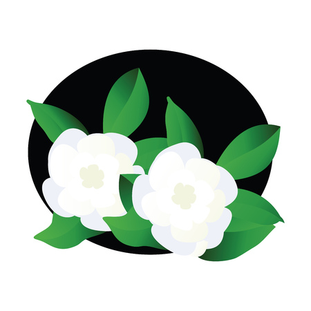 Vector illustration of white gardenia  flowers with green leafs in  black circle on white background.