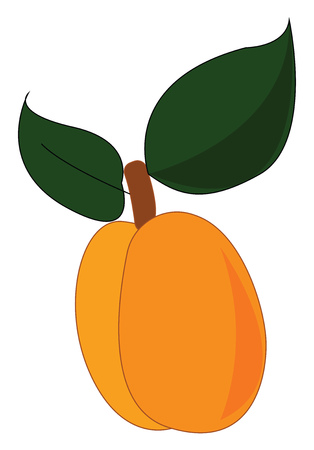 An apricot sliced in half with two green leaves, vector, color drawing or illustration.