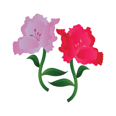 Vector illustration of lila and pink azalea  flowers on white background.