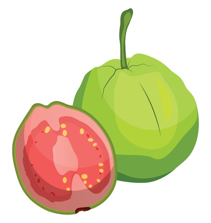 Green guava fruit cut in half vector illustration on white background.