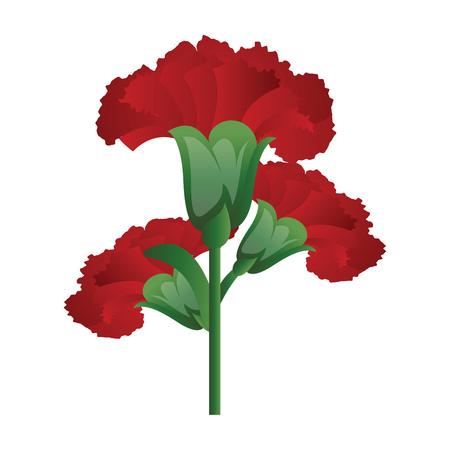 Vector illustration of red carnation  flowers  on white background.