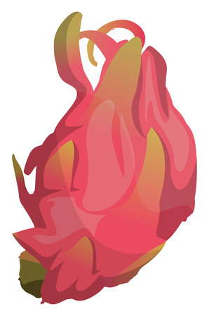 Cartoon pink dragonfruit vector illustration on white background. Archivio Fotografico - 123449123