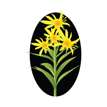 Vector illustration of yellow solidago flowers with green leafs in black circle on white background.