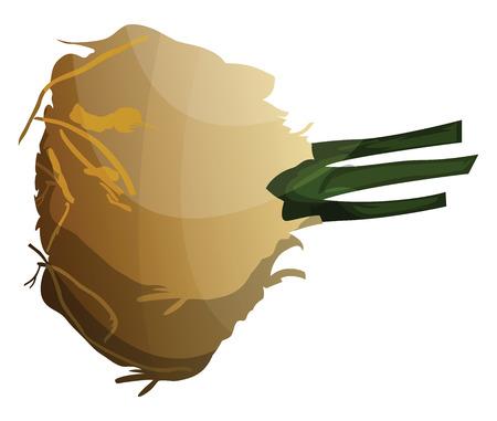 Cartoon celeriac vector illustration of vegetables on white background. 向量圖像