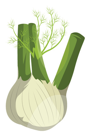 Cartoon fennel vector illustration of vegetables on white background.