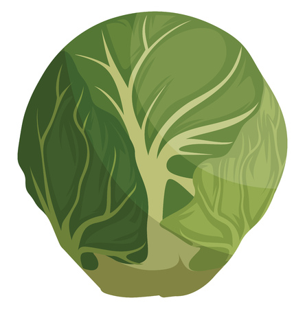 Green brussel sprout cartoon vector illustration of vegetables on white background.