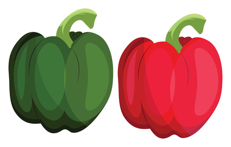 Green and red bellpepper vector illustration of vegetables on white background.