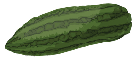 Green bitter melonvector illustration of vegetables on white background. Illustration
