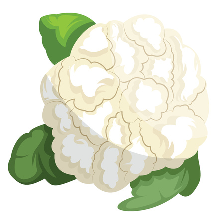 White cauliflower with green leafsvector illustration of vegetables on white background.