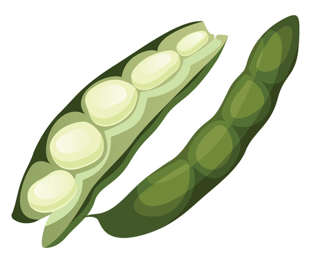 Green beans vector illustration of vegetables on white background.