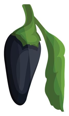 Dark blue chilli pepper with green leaf vector illustration of vegetables on white background. Illustration