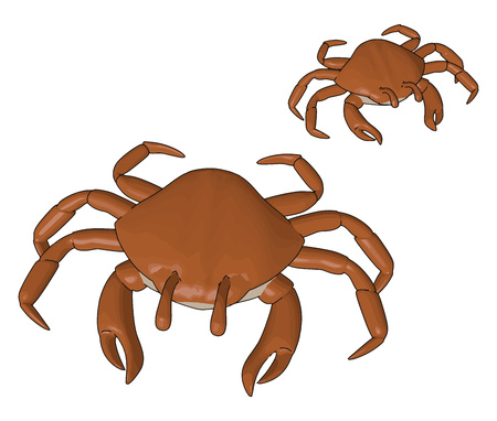 Crabs body is covered by exoskeleton Pincers are their weapons Normally eaten whole including the shell but in some lobster only claws and legs vector color drawing or illustration Illustration