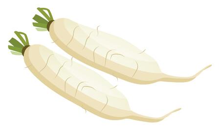 White radish roots vector illustration of vegetables on white background. Çizim