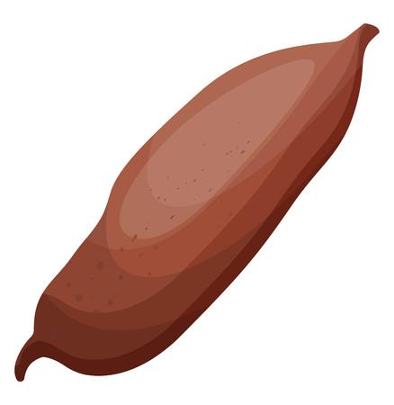 Brown kumara root vector illustration of vegetables on white background. Standard-Bild - 123449335