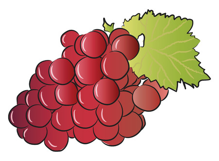 A bunch of ripped red grape fruit with leaf vector color drawing or illustration