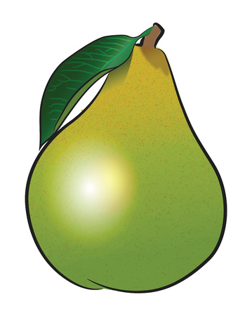 A green ripe pear fruit with stem vector color drawing or illustration