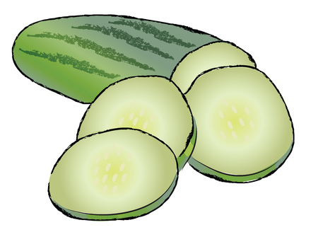Sliced fresh green cucumber vegetable for salad vector color drawing or illustration Ilustração