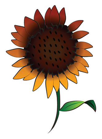 A big sunflower with green leaf & stem vector color drawing or illustration