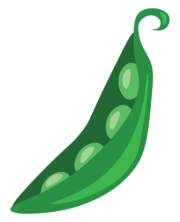 A pod of fresh green beans is been peeled vector color drawing or illustration