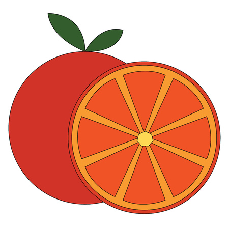 Simple vector illustration of an orange cut in half white background