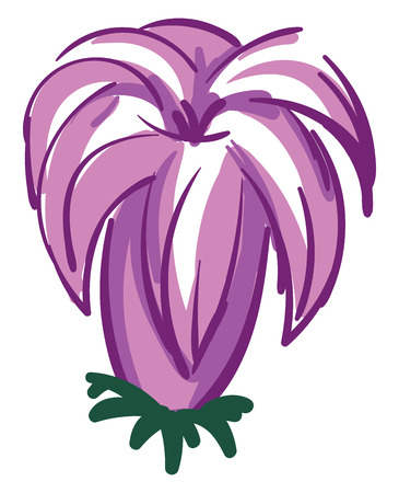 Purple lily flower illustration color vector on white background