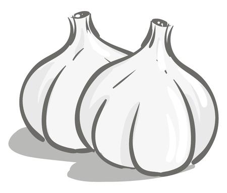 Semplice illustrazione vettoriale di due aglio bianco su sfondo bianco Vettoriali