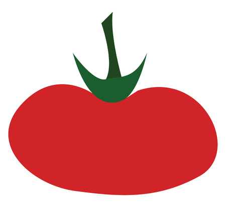 A fleshy red color elongated tomato vector color drawing or illustration