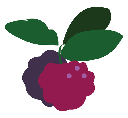 A pair of berries with a bunch of green leaves vector color drawing or illustration Stock Illustratie