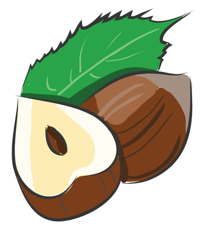 Cartoon vector illustration of a hazelnut cutted in a half with a leaf on white background