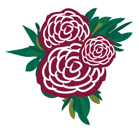 A bunch of maroon and white roses vector color drawing or illustration