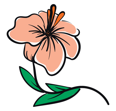 Vector illustration of a pale pink hibiscus flower with orange pestle and green leaves white background