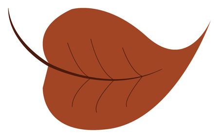 A dry brown leaf vector color drawing or illustration