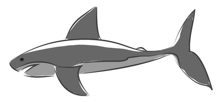 One of the most feared sea animal a blue shark vector color drawing or illustration 일러스트