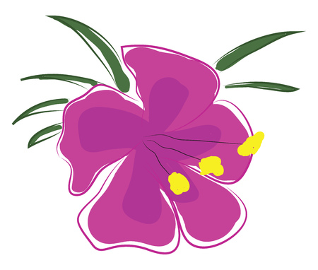 Pink orchid flower with yellow pestle and green leaves vector illustration on white background