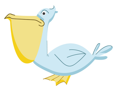 Pelican bird with long throat pouch vector or color illustration