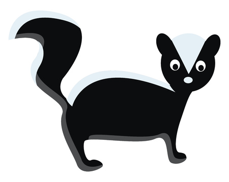 A skunk with long tail vector or color illustration