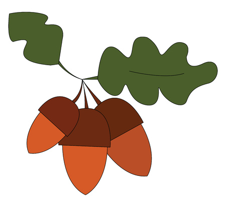 Three brown acorn vector illustration on white background