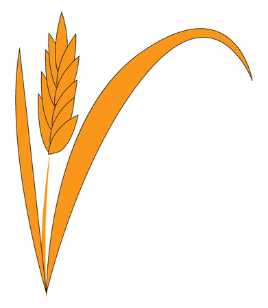 A wheat grass stand vector or color illustration