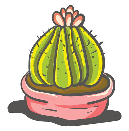 Mammillary cactus with flower vector or color illustration