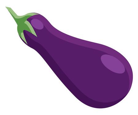 A farm fresh eggplant vector or color illustration