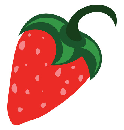 A fresh strawberry vector or color illustration