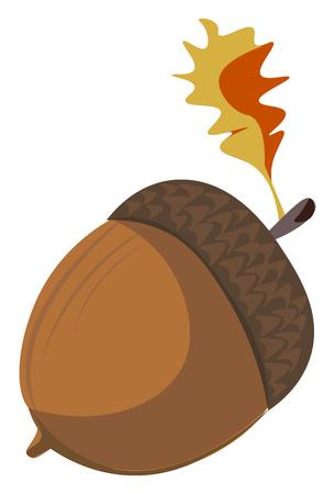 Cartoon brown acorn vector illustration on white background